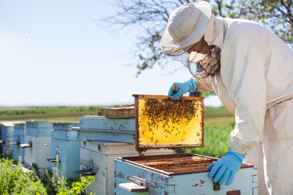 A beekeeper in action