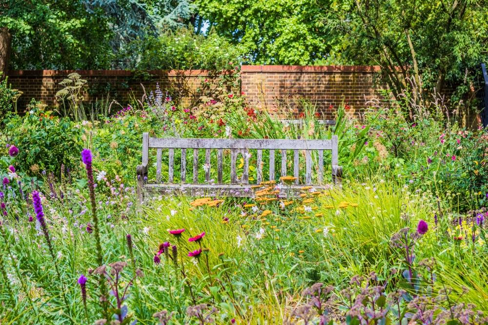 Bench in overgrown garden