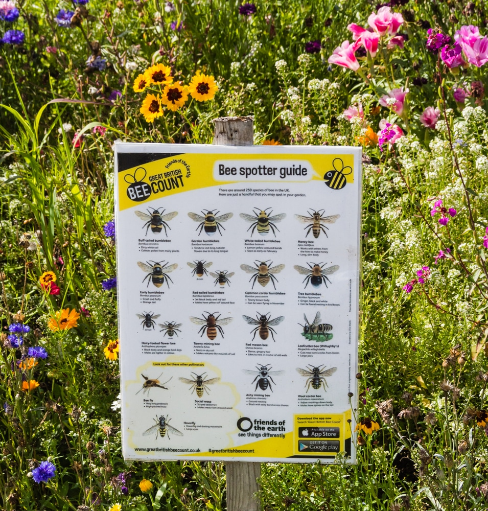 Bee spotter guide