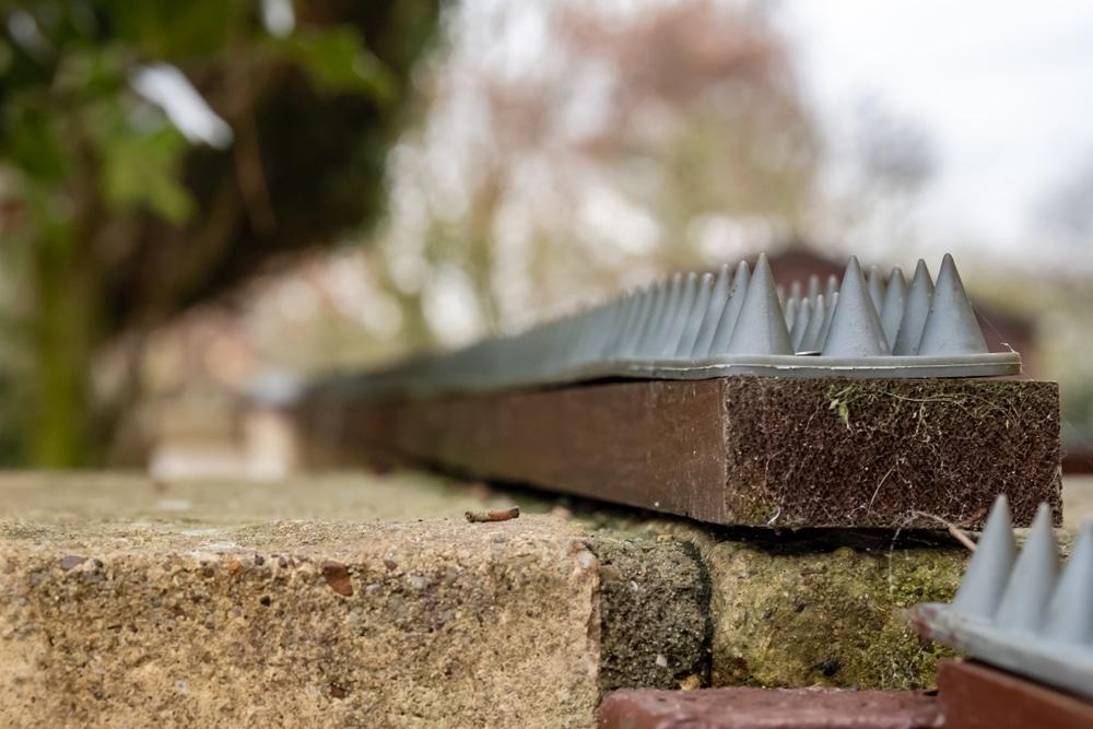 cat deterrent spikes on a garden wall