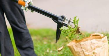 woman placing weeds in carrier bag using weeding tool