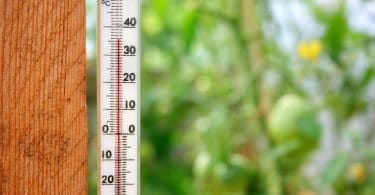 thermometer with greenhouse plants in background