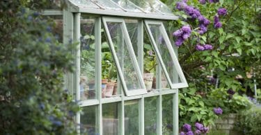 green greenhouse with glass panels and purple flowers in background
