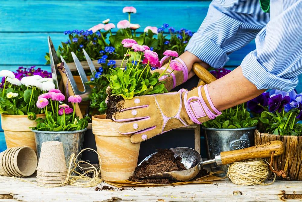 female gardener potting a plant
