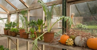 various vegetables sat on a greenhouse shelf